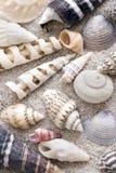κοχύλι θάλασσας συλλογής Στοκ εικόνες με δικαίωμα ελεύθερης χρήσης