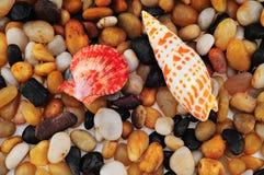 κοχύλι θάλασσας χαλικι στοκ φωτογραφία με δικαίωμα ελεύθερης χρήσης