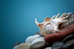 Κοχύλι θάλασσας Στοκ φωτογραφίες με δικαίωμα ελεύθερης χρήσης