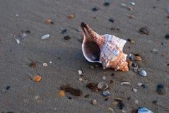 κοχύλι θάλασσας Στοκ εικόνα με δικαίωμα ελεύθερης χρήσης