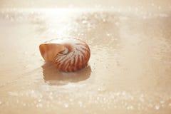 Κοχύλι θάλασσας Nautilus στη μαλακή ανατολή παραλιών ight Στοκ Φωτογραφίες