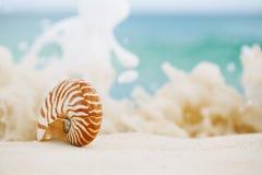 Κοχύλι θάλασσας Nautilus στο κύμα θάλασσας Στοκ εικόνα με δικαίωμα ελεύθερης χρήσης