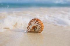 Κοχύλι θάλασσας Nautilus στο κύμα θάλασσας Στοκ Εικόνα