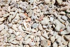 κοχύλι κοραλλιών ανασκόπ Στοκ φωτογραφία με δικαίωμα ελεύθερης χρήσης