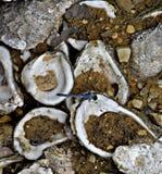 Κοχύλι λιβελλουλών στοκ φωτογραφία με δικαίωμα ελεύθερης χρήσης