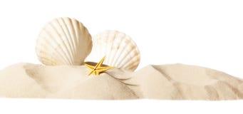 κοχύλι παραλιών Στοκ εικόνες με δικαίωμα ελεύθερης χρήσης