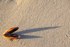 κοχύλι σκιών Στοκ Φωτογραφία