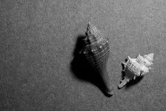 Κοχύλια από τη θάλασσα Στοκ φωτογραφίες με δικαίωμα ελεύθερης χρήσης
