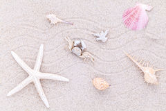 Κοχύλια, αστερίας και καβούρι θάλασσας στην άμμο παραλιών για το καλοκαίρι Στοκ Φωτογραφία