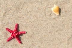 Κοχύλια αστεριών και θάλασσας με την άμμο Στοκ εικόνες με δικαίωμα ελεύθερης χρήσης