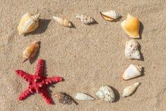 Κοχύλια αστεριών και θάλασσας με την άμμο Στοκ Φωτογραφίες