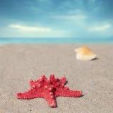 Κοχύλια αστεριών και θάλασσας με την άμμο Στοκ φωτογραφία με δικαίωμα ελεύθερης χρήσης