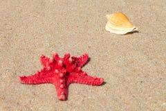 Κοχύλια αστεριών και θάλασσας με την άμμο Στοκ Εικόνες