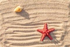 Κοχύλια αστεριών και θάλασσας με την άμμο Στοκ Φωτογραφία
