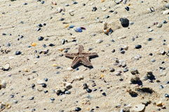 Κοχύλια αστεριών και παραλιών στην άμμο Στοκ Φωτογραφία