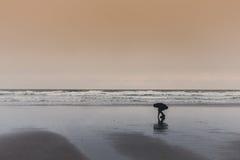 Κοχύλια επιλογής στην παραλία Στοκ Εικόνες