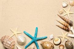 κοχύλια θάλασσας άμμου όμορφη κενή θερινή πετοσφαίριση παραλιών σφαιρών ανασκόπησης Τοπ όψη Στοκ Φωτογραφίες