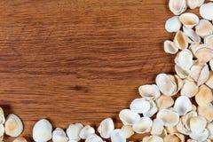 κοχύλια θάλασσας άμμου όμορφη κενή θερινή πετοσφαίριση παραλιών σφαιρών ανασκόπησης Τοπ όψη Θαλασσινά κοχύλια σε έναν ξύλινο πίνα Στοκ Φωτογραφίες