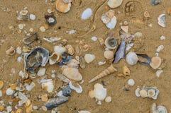 κοχύλια θάλασσας άμμου όμορφη κενή θερινή πετοσφαίριση παραλιών σφαιρών ανασκόπησης Στοκ φωτογραφίες με δικαίωμα ελεύθερης χρήσης
