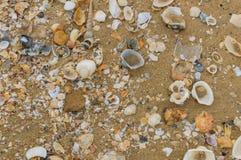 κοχύλια θάλασσας άμμου όμορφη κενή θερινή πετοσφαίριση παραλιών σφαιρών ανασκόπησης Στοκ Φωτογραφία