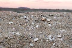 κοχύλια θάλασσας άμμου Στοκ εικόνες με δικαίωμα ελεύθερης χρήσης