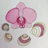 Κοχύλια θάλασσας και ζωγραφική watercolor λουλουδιών ορχιδεών Στοκ Εικόνες