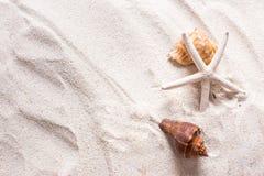 κοχύλια θάλασσας με την άμμο ως υπόβαθρο και copyspace, θερινή έννοια Στοκ Εικόνες