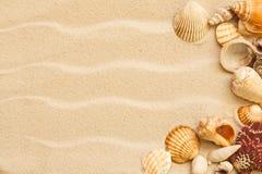 Κοχύλια θάλασσας με την άμμο Στοκ Φωτογραφία