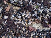 Κοχύλια θάλασσας σε μια παραλία Στοκ Εικόνες