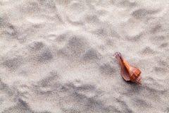 Κοχύλια θάλασσας στην άμμο παραλιών για το καλοκαίρι και την παραλία Στοκ Εικόνα