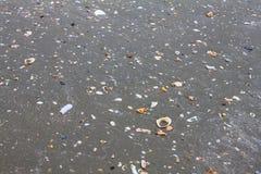 Κοχύλια θάλασσας στην άμμο παραλιών Στοκ φωτογραφία με δικαίωμα ελεύθερης χρήσης