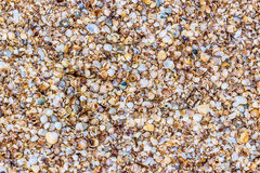 Κοχύλια θάλασσας στην άμμο ως υπόβαθρο Στοκ εικόνες με δικαίωμα ελεύθερης χρήσης