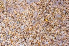 Κοχύλια θάλασσας στην άμμο ως υπόβαθρο Στοκ Φωτογραφίες