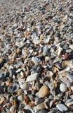 Κοχύλια θάλασσας στη θάλασσα Στοκ φωτογραφίες με δικαίωμα ελεύθερης χρήσης