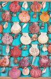 Κοχύλια θάλασσας στο μπλε ξύλινο υπόβαθρο στοκ εικόνα με δικαίωμα ελεύθερης χρήσης