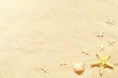 Κοχύλια θάλασσας στο υπόβαθρο άμμου παραλιών ακτών θερινή κυματωγή πετρών άμμου της Κύπρου μεσογειακή Στοκ Εικόνες