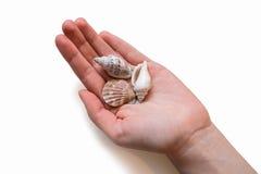 Κοχύλια θάλασσας στο χέρι της γυναίκας Στοκ Εικόνα