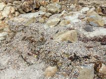 Κοχύλια και βράχοι Στοκ Εικόνες