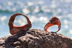 Κοχύλια και θάλασσα Στοκ φωτογραφία με δικαίωμα ελεύθερης χρήσης