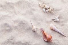 Κοχύλια και καβούρι θάλασσας στην άμμο παραλιών για το καλοκαίρι και την έννοια παραλιών Στοκ Εικόνα