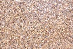 Κοχύλια και κομμάτια πετρών κάτω από το νερό στοκ εικόνα