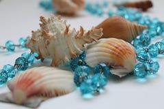 Κοχύλια και μπλε χάντρες Στοκ Εικόνες