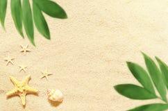 Κοχύλια και φοίνικας θάλασσας στο υπόβαθρο άμμου παραλιών ακτών θερινή κυματωγή πετρών άμμου της Κύπρου μεσογειακή Στοκ φωτογραφία με δικαίωμα ελεύθερης χρήσης