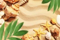 Κοχύλια και φοίνικας θάλασσας στο υπόβαθρο άμμου παραλιών ακτών θερινή κυματωγή πετρών άμμου της Κύπρου μεσογειακή Στοκ Εικόνα