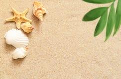 Κοχύλια και φοίνικας θάλασσας στο υπόβαθρο άμμου παραλιών ακτών θερινή κυματωγή πετρών άμμου της Κύπρου μεσογειακή Στοκ εικόνα με δικαίωμα ελεύθερης χρήσης