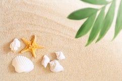 Κοχύλια και φοίνικας θάλασσας στο υπόβαθρο άμμου παραλιών ακτών θερινή κυματωγή πετρών άμμου της Κύπρου μεσογειακή Στοκ Εικόνες
