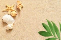 Κοχύλια και φοίνικας θάλασσας στο υπόβαθρο άμμου παραλιών ακτών θερινή κυματωγή πετρών άμμου της Κύπρου μεσογειακή Στοκ φωτογραφίες με δικαίωμα ελεύθερης χρήσης