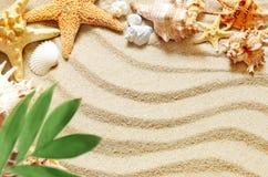 Κοχύλια και φοίνικας θάλασσας στο υπόβαθρο άμμου παραλιών ακτών θερινή κυματωγή πετρών άμμου της Κύπρου μεσογειακή Στοκ Φωτογραφίες