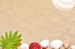 Κοχύλια και φοίνικας θάλασσας στο υπόβαθρο άμμου παραλιών ακτών θερινή κυματωγή πετρών άμμου της Κύπρου μεσογειακή Στοκ Φωτογραφία