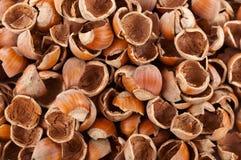 Κοχύλια καρυδιών Στοκ Εικόνα